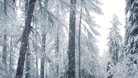 Πτώσεις χιονιού στο χειμερινό δάσος απόθεμα βίντεο