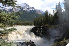 Πτώσεις Athabasca στην ιάσπιδα Στοκ εικόνες με δικαίωμα ελεύθερης χρήσης