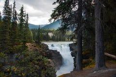 Πτώσεις Athabasca στο εθνικό πάρκο ιασπίδων - Αλμπέρτα, Καναδάς στοκ φωτογραφίες με δικαίωμα ελεύθερης χρήσης
