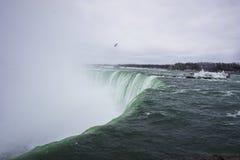 Πτώσεις Niagara με seagull Στοκ Εικόνες
