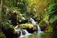 Πτώσεις Onomea που βρίσκονται στον τροπικό βοτανικό κήπο της Χαβάης στο μεγάλο νησί της Χαβάης Στοκ εικόνα με δικαίωμα ελεύθερης χρήσης