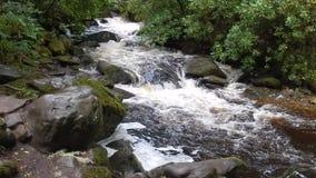 Πτώσεις Torc, εθνικό πάρκο Killarney, Ιρλανδία απόθεμα βίντεο