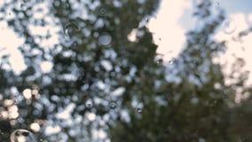Πτώση αχλαδιών από το δέντρο στη χλόη απόθεμα βίντεο