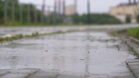Πτώση βροχής στο έδαφος στην εποχή βροχών απόθεμα βίντεο
