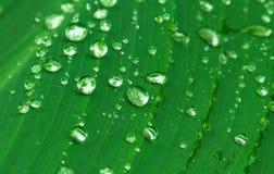 Πτώση βροχής στο πράσινο φύλλο Εξωτικός κήπος μετά από τη βροχή στοκ φωτογραφία