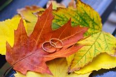 Πτώση γαμήλιων δαχτυλιδιών Στοκ Εικόνες