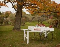 πτώση κάρρων μήλων Στοκ Εικόνα