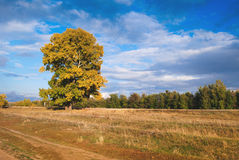 Πτώση, κίτρινα φύλλα Στοκ Φωτογραφίες