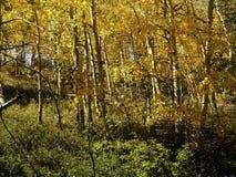 Πτώση κίτρινο Apens Στοκ φωτογραφία με δικαίωμα ελεύθερης χρήσης
