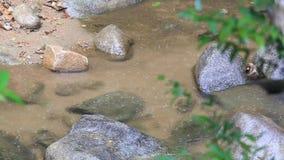 Πτώση και ψάρια βροχής στη φύση, καταρράκτης στο Βορρά της Ταϊλάνδης απόθεμα βίντεο