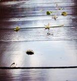 Πτώση λουλουδιών και φύλλων στο ξύλινο πάτωμα στοκ εικόνα
