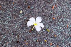 Πτώση λουλουδιών στο έδαφος Στοκ εικόνες με δικαίωμα ελεύθερης χρήσης