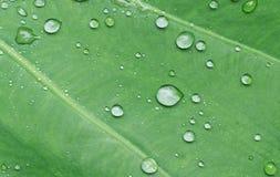 Πτώση νερού βροχερό ημερησίως φύλλων Στοκ φωτογραφίες με δικαίωμα ελεύθερης χρήσης