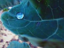 Πτώση νερού σε ένα φύλλο στοκ εικόνες