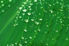 Πτώση νερού στις πράσινες γραμμές φύλλων Εξωτικός κήπος μετά από τη βροχή Υγρή εποχή στους τροπικούς κύκλους στοκ φωτογραφίες