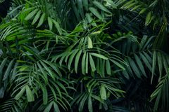 Πτώση νερού στο πράσινο φύλλο φοινικών Στοκ Εικόνες