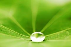 Πτώση νερού στο πράσινο φύλλο Στοκ εικόνα με δικαίωμα ελεύθερης χρήσης