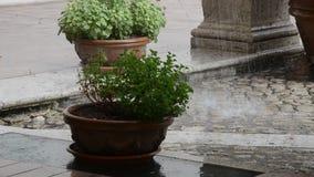Πτώση πτώσεων βροχής στις εγκαταστάσεις στα δοχεία απόθεμα βίντεο