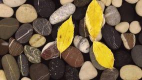 Πτώση σταγόνων βροχής στο νερό με τις πέτρες και τα επιπλέοντα κίτρινα φύλλα φιλμ μικρού μήκους