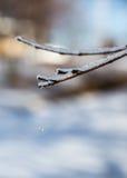 Πτώση σταλαγματιάς Στοκ εικόνες με δικαίωμα ελεύθερης χρήσης