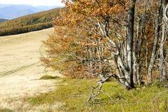 Πτώση στα βουνά Στοκ εικόνες με δικαίωμα ελεύθερης χρήσης
