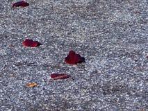 Πτώση στην πόλη Στοκ Φωτογραφίες
