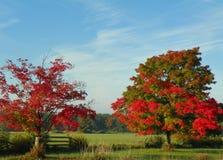Πτώση στη χώρα με τα κόκκινα δέντρα σφενδάμνου, το διασπασμένο φράκτη ραγών και το β Στοκ φωτογραφία με δικαίωμα ελεύθερης χρήσης