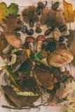 Πτώση στον πίνακα με με τα μανιτάρια και τα φρούτα φθινοπώρου στοκ εικόνες