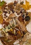Πτώση στον πίνακα με με τα φρούτα φθινοπώρου στοκ φωτογραφία με δικαίωμα ελεύθερης χρήσης