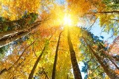 Πτώση στο δάσος Στοκ Φωτογραφίες