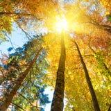 Πτώση στο δάσος Στοκ φωτογραφία με δικαίωμα ελεύθερης χρήσης