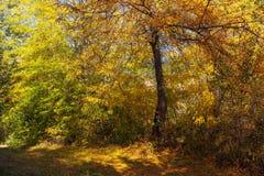 Πτώση στο δάσος στοκ φωτογραφίες με δικαίωμα ελεύθερης χρήσης