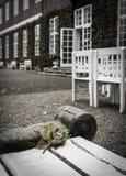 Πτώση στο κάστρο Στοκ εικόνα με δικαίωμα ελεύθερης χρήσης