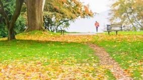 Πτώση στο πάρκο του Stanley στοκ φωτογραφίες με δικαίωμα ελεύθερης χρήσης