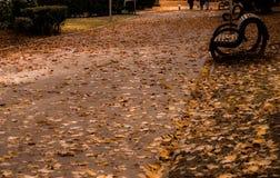 Πτώση στο πάρκο Στοκ Εικόνες