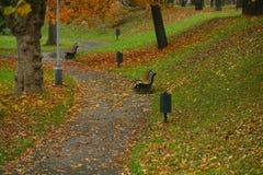 Πτώση στο πάρκο Στοκ Εικόνα