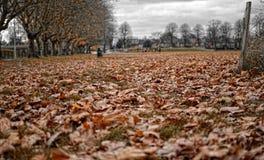 Πτώση στο πάρκο Στοκ φωτογραφίες με δικαίωμα ελεύθερης χρήσης