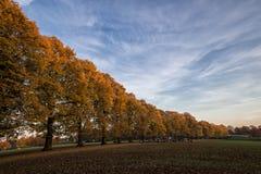 Πτώση στο πάρκο Στοκ Φωτογραφίες
