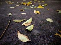 πτώση στο πάτωμα Στοκ φωτογραφίες με δικαίωμα ελεύθερης χρήσης