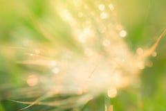 Πτώση στο φύλλο με το φως ήλιων Στοκ φωτογραφία με δικαίωμα ελεύθερης χρήσης