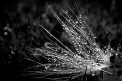 Πτώση στο φύλλο με το φως ήλιων Στοκ Φωτογραφίες