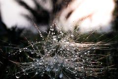 Πτώση στο φύλλο με το φως ήλιων Στοκ φωτογραφίες με δικαίωμα ελεύθερης χρήσης