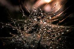 Πτώση στο φύλλο με το φως ήλιων Στοκ Εικόνες