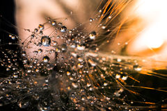 Πτώση στο φύλλο με το φως ήλιων Στοκ εικόνες με δικαίωμα ελεύθερης χρήσης