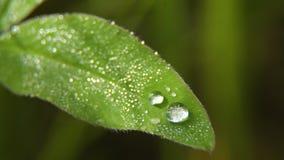 Πτώση της δροσιάς στη χλόη Στοκ Εικόνες