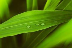 Πτώση της δροσιάς το πρωί στο φύλλο με το φως ήλιων Στοκ Φωτογραφία