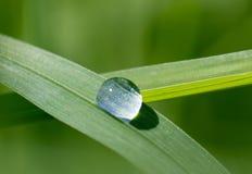 Πτώση της δροσιάς στη λεπίδα της χλόης Στοκ Εικόνες