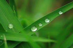 Πτώση του νερού στα φύλλα στοκ φωτογραφία με δικαίωμα ελεύθερης χρήσης