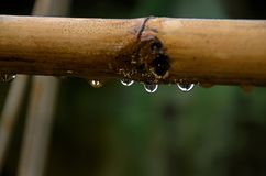 Πτώση του νερού στο μπαμπού Στοκ εικόνα με δικαίωμα ελεύθερης χρήσης