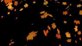 Πτώση του σφενδάμνου φύλλων διανυσματική απεικόνιση